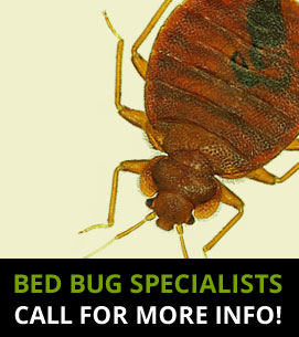 Bed Bug Specialists Harrow